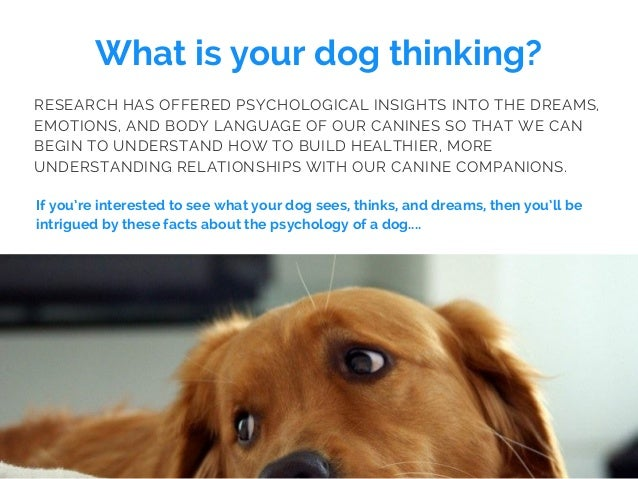 What is your dog thinking? If you're interested to see what your dog sees, thinks, and dreams, then you'll be intrigued by...