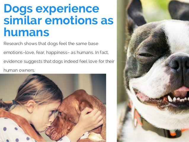 Dogs experience similar emotions as humans Research shows that dogs feel the same base emotions–love, fear, happiness– as ...