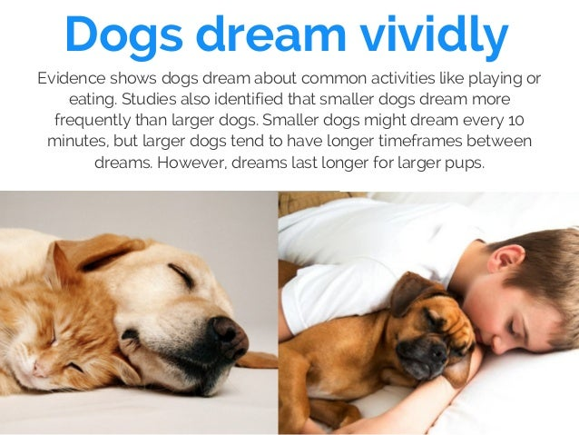 Dogs dream vividly Evidence shows dogs dream about common activities like playing or eating. Studies also identified that ...