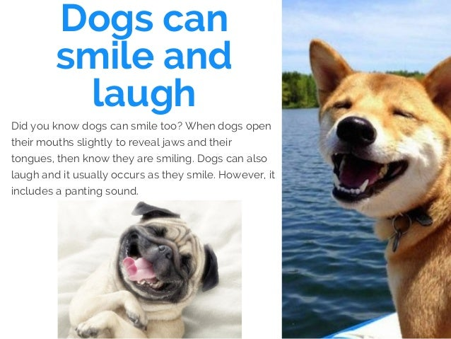 Dogs can smile and laugh Did you know dogs can smile too? When dogs open their mouths slightly to reveal jaws and their to...