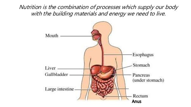 Inside your body pwp