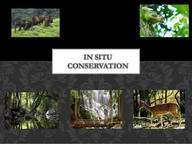 In situ conservation2222