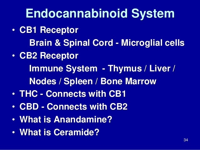 Endocannabinoid System • CB1 Receptor Brain & Spinal Cord - Microglial cells • CB2 Receptor Immune System - Thymus / Liver...