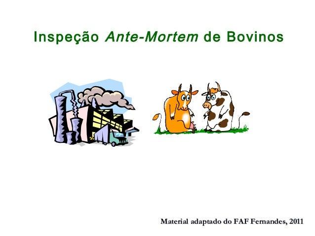 Inspeção Ante-Mortem de Bovinos Material adaptado do FAF Fernandes, 2011Material adaptado do FAF Fernandes, 2011