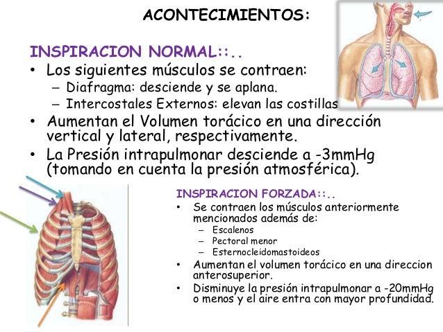 ACONTECIMIENTOS:INSPIRACION NORMAL::..• Los siguientes músculos se contraen:   – Diafragma: desciende y se aplana.   – Int...