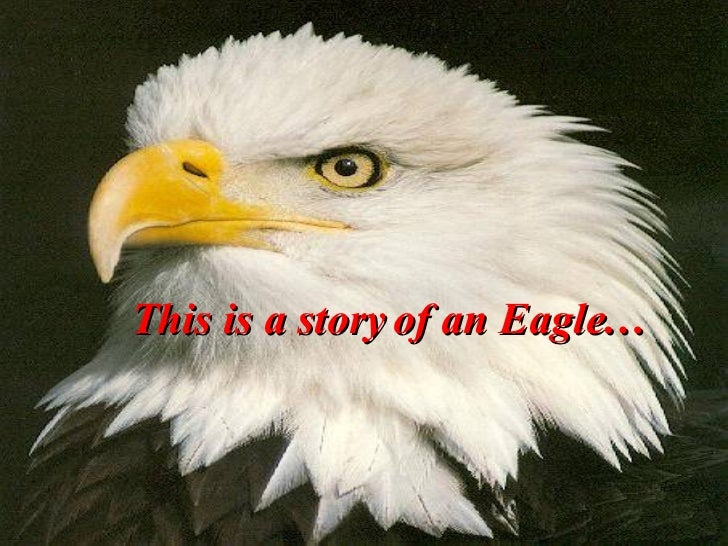 This is a story of an Eagle…