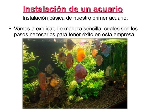 Instalación de un acuarioInstalación de un acuarioInstalación básica de nuestro primer acuario.● Vamos a explicar, de mane...