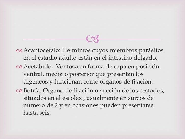 Los indicios de las lombrices en el cuerpo