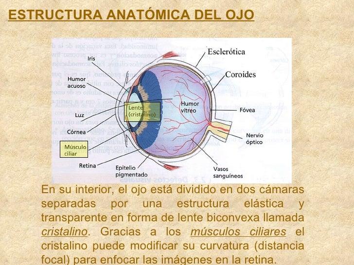 El ojo y los Instrumentos Opticos