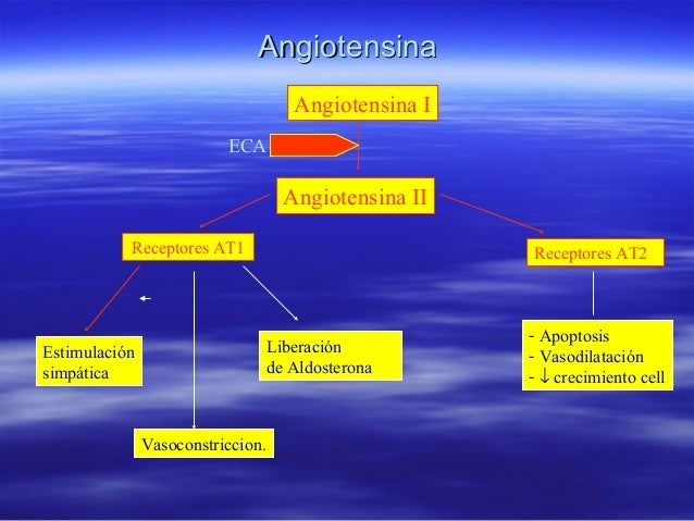 Angiotensina I Angiotensina II ECA Receptores AT1 Receptores AT2 Estimulación simpática Vasoconstriccion. Liberación de Al...