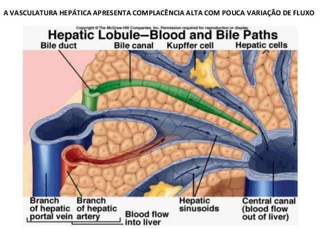 ∆P = Q X R ∆P Hipertensão PortalHipertensão Portal Fluxo Sanguíneo Portal ( Q ) Resistência ( R ) ao Fluxo Portal quando f...