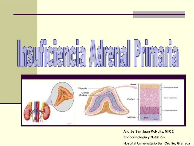 INSUFICIENCIA ADRENAL PRIMARIA EBOOK