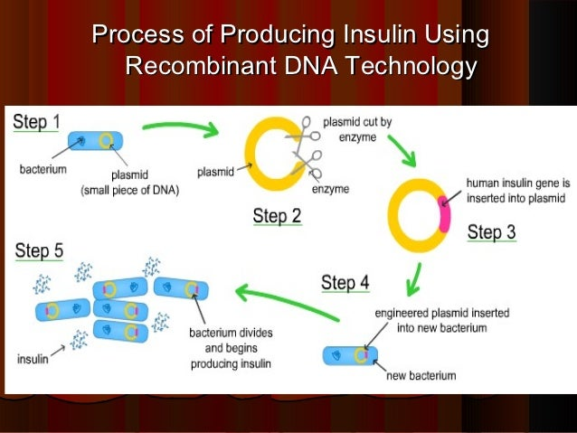 human insulin and recombinant dna technology essay Recombinant dna technology to enable the rapid production of human  by  using messenger rna- mrna molecules carrying the code for insulin are  common.