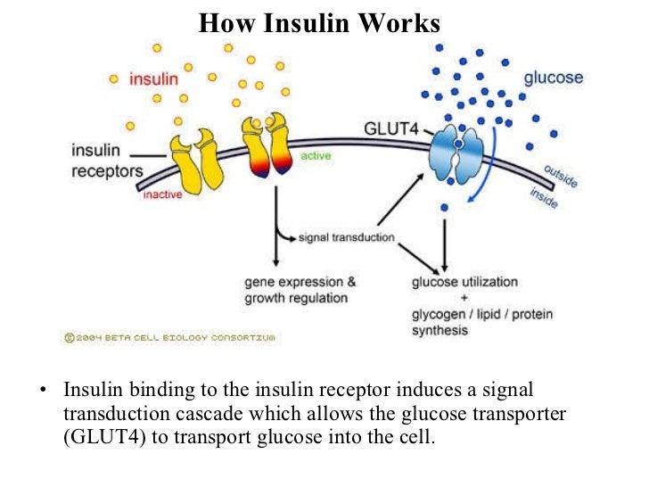 Insulin 1