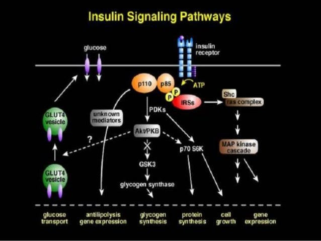 insulin mechanism of action pdf