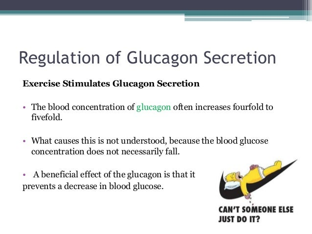 Does glucagon stimulate or inhibit insulin release