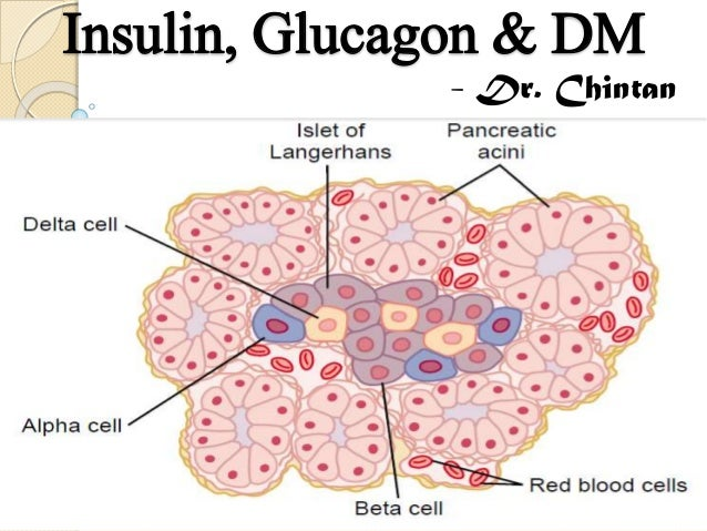 Insulin, glucagon & dm