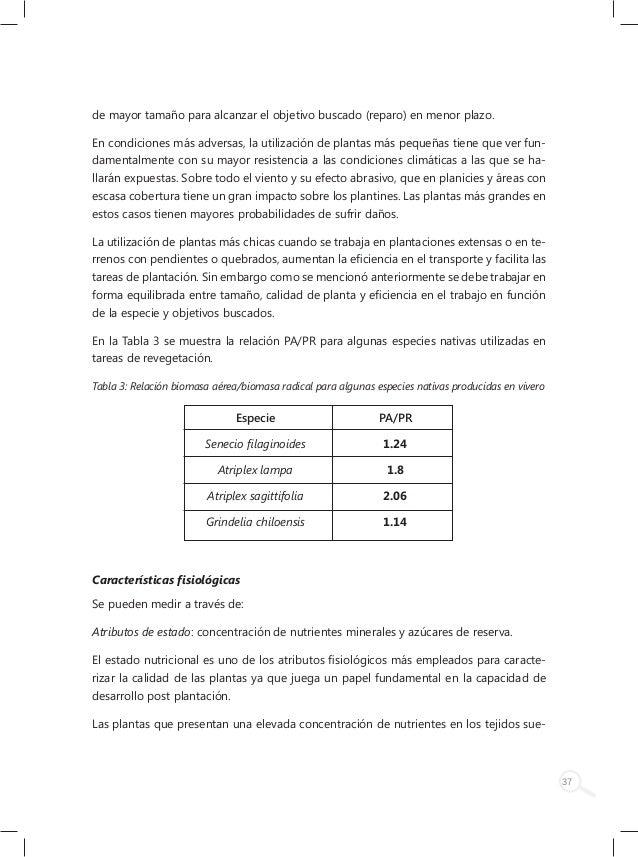 Inta experimentia viverizacion b 1 for Viveros en lampa