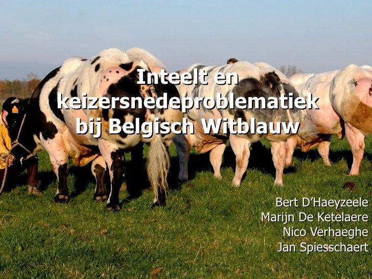 Inteelt en keizersnedeproblematiek bij Belgisch Witblauw Bert D'Haeyzeele Marijn De Ketelaere Nico Verhaeghe Jan Spiesscha...