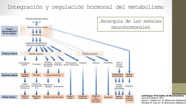 metabolismo cuerpos cetonicos Consejos y Guía