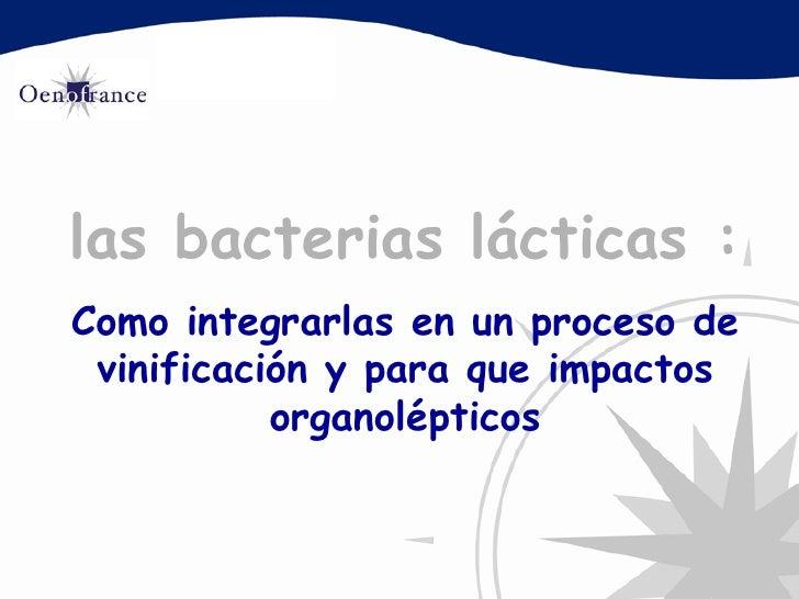 las  bacterias  lácticas : Como integrarlas en un proceso de vinificación y para que impactos organolépticos