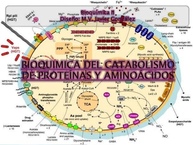  Casi todas las proteínas del organismo están en una constante dinámica de síntesis (1-2% del total de proteínas), a part...