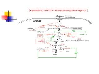 Reasearch en Tipos de metabolismo