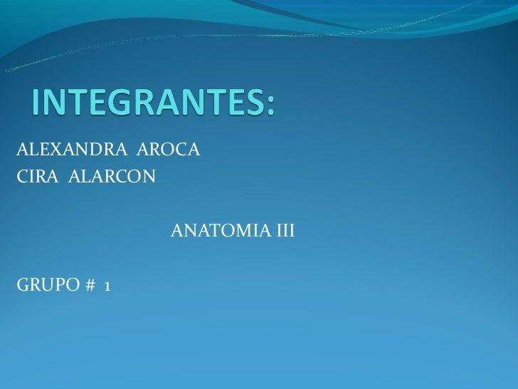 ALEXANDRA AROCACIRA ALARCON            ANATOMIA IIIGRUPO # 1