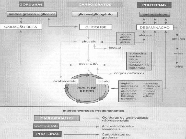Interconversões entre os Nutrientes