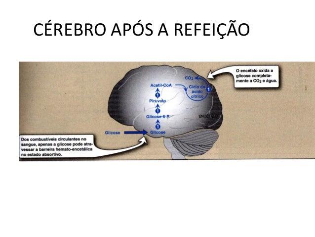 CÉREBRO APÓS A REFEIÇÃO