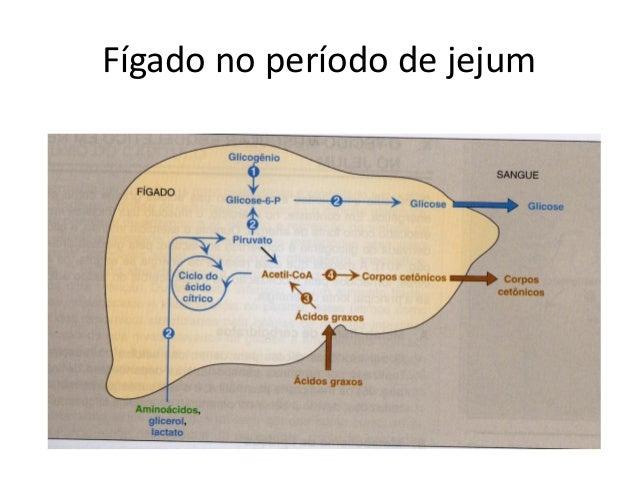 Fígado no período de jejum