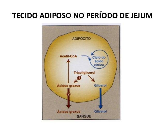 TECIDO ADIPOSO NO PERÍODO DE JEJUM