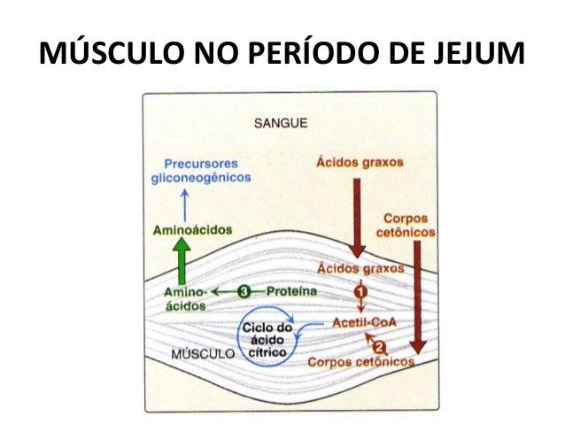 MÚSCULO NO PERÍODO DE JEJUM