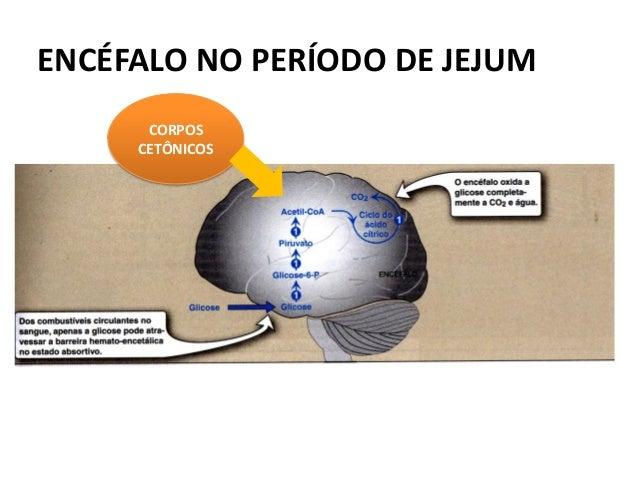 ENCÉFALO NO PERÍODO DE JEJUM  CORPOS CETÔNICOS