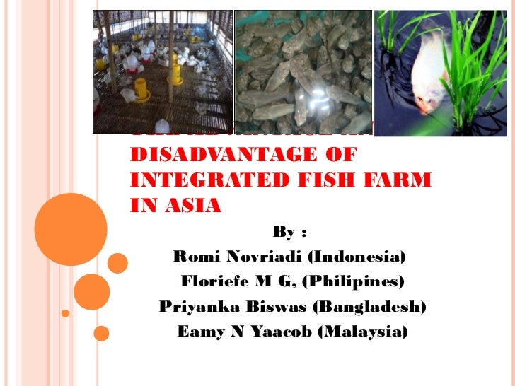 THE ADVANTAGE AND THEDISADVANTAGE OFINTEGRATED FISH FARMIN ASIA             By :  Romi Novriadi (Indonesia)   Floriefe M G...