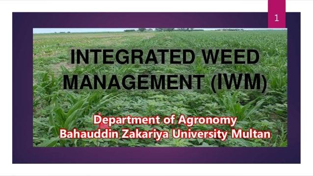 INTEGRATED WEED MANAGEMENT (IWM) 1 Department of Agronomy Bahauddin Zakariya University Multan