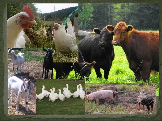 Integrating livestock into cropping system Slide 2