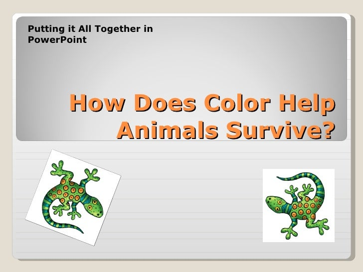 How Does Color Help Animals Survive? Putting it All Together in PowerPoint