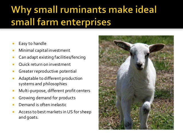 Integrating livestock into a small farm: sheep and goats