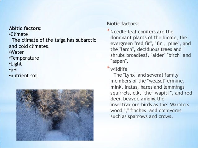 the characteristics of the tundra