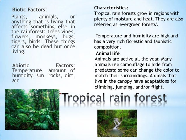 a report on the tropical rainforest
