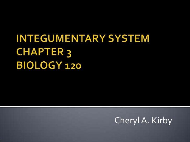 INTEGUMENTARY SYSTEMCHAPTER 3BIOLOGY 120<br />Cheryl A. Kirby<br />