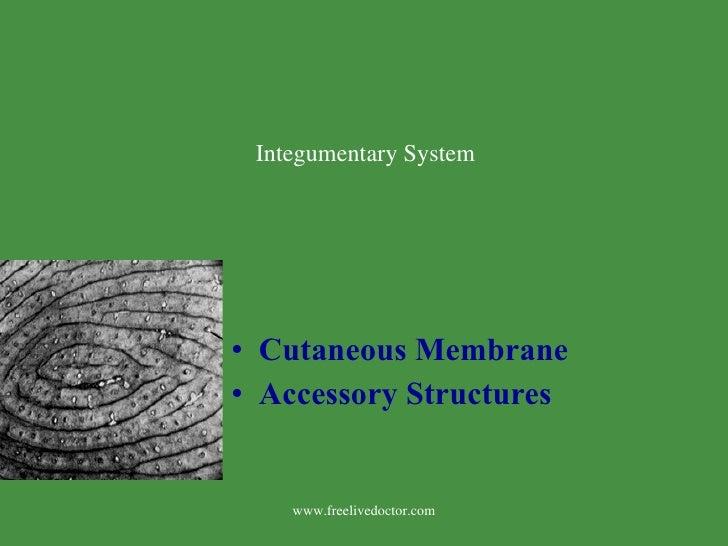 <ul><li>Cutaneous Membrane </li></ul><ul><li>Accessory Structures </li></ul>www.freelivedoctor.com Integumentary System