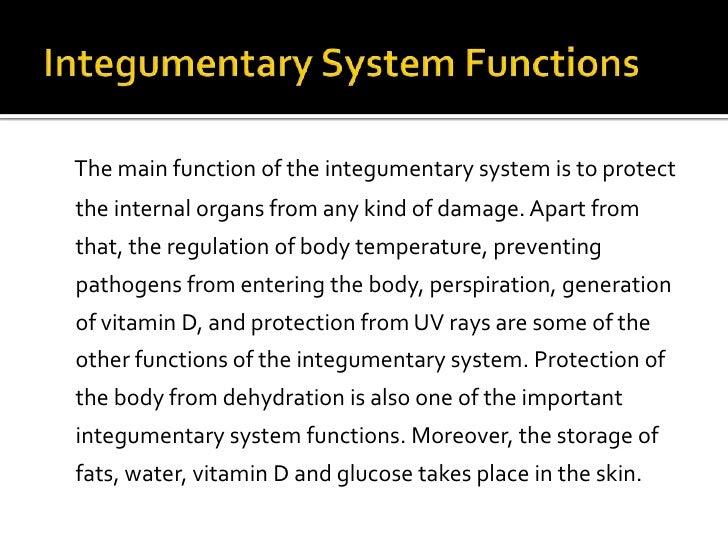 Integumentary System Presen03