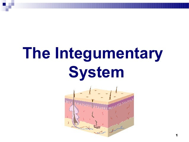 1The IntegumentarySystem