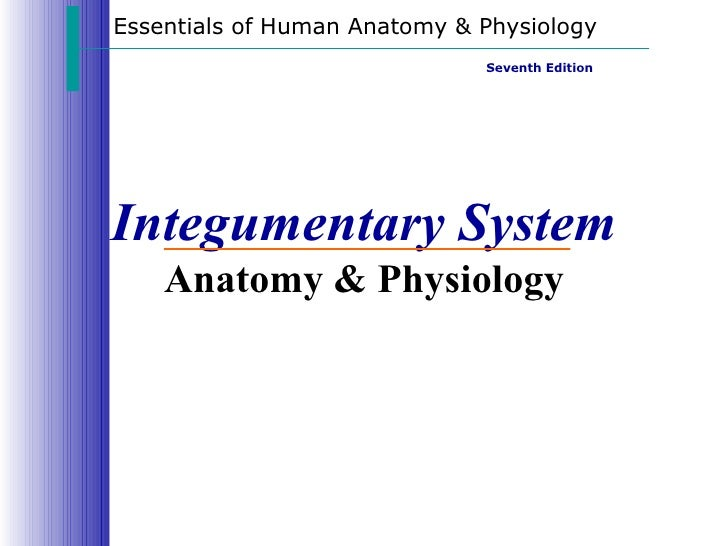 Integumentary System Anatomy & Physiology Essentials of Human Anatomy & Physiology Seventh Edition