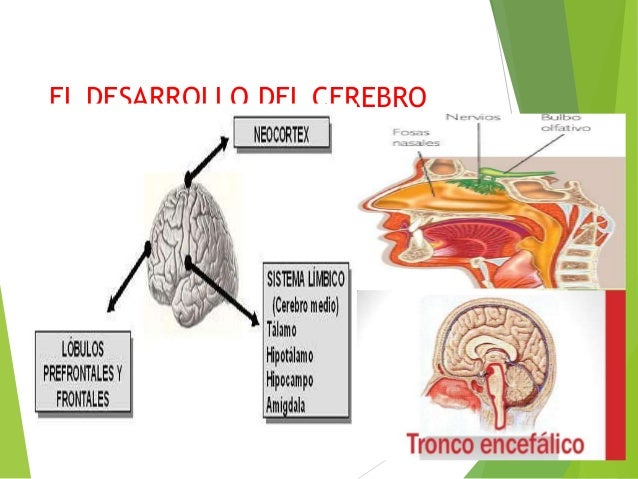 Inteligencia emocional- Daniel Goleman by Melani Moreno
