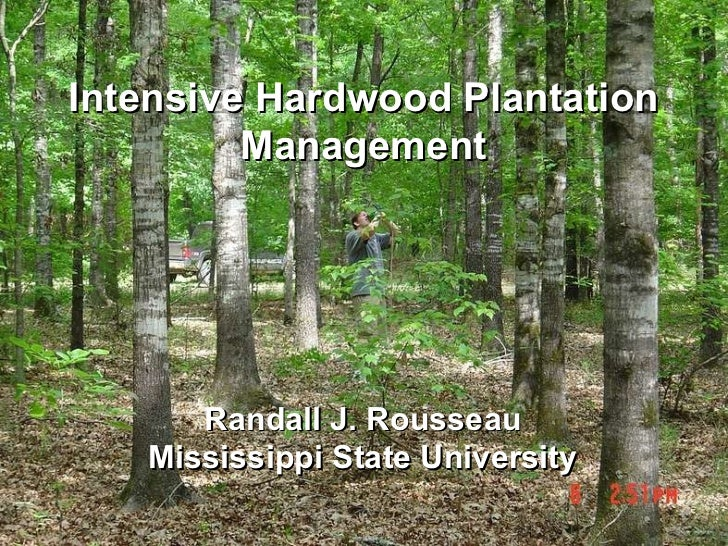 Intensive Hardwood Plantation Management Randall J. Rousseau Mississippi State University
