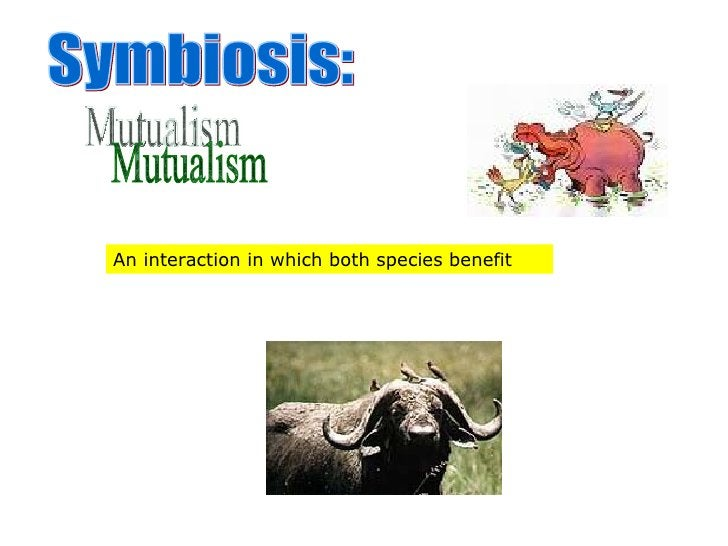 Symbiosis: Mutualism An interaction in which both species benefit