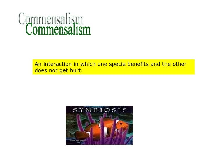 Commensalism An interaction in which one specie benefits and the other does not get hurt.